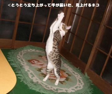 ちゅう闘10