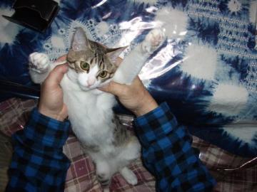 ネコいじりA05