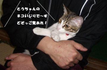 ネコいじりB01