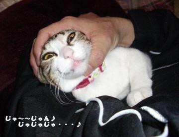 ネコいじりB05