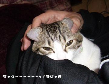 ネコいじりB07