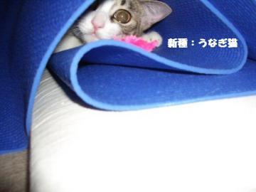 のりまき娘05