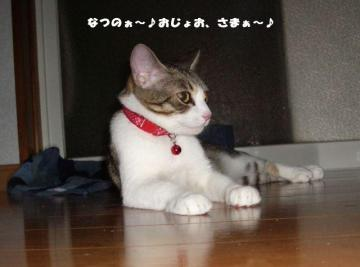 かんづめ04