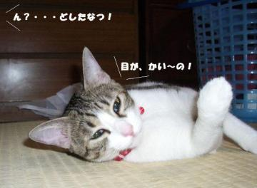 猫のヘソ01