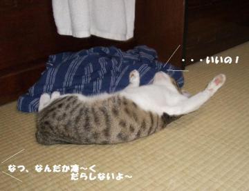 猫のヘソ02