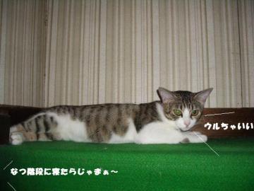 猫のヘソ05