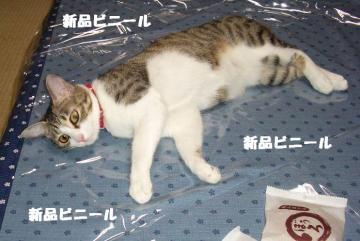 眠り姫01