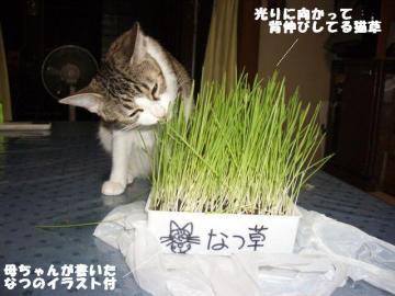 なつ草01