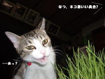 なつ草02