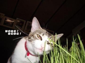 なつ草03