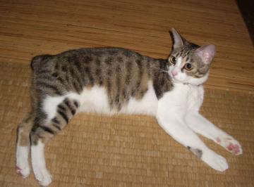 猫クローク01
