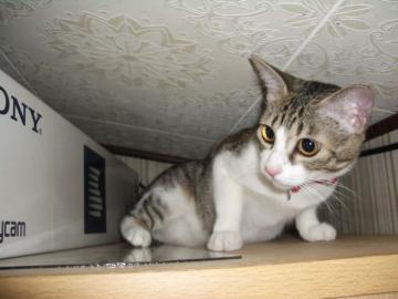 猫クローク04