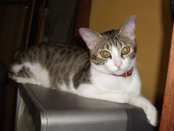 猫パンチ01
