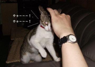 猫パンチ04