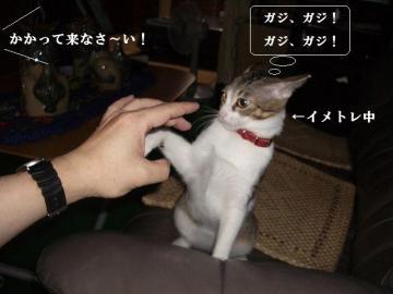猫パンチ05