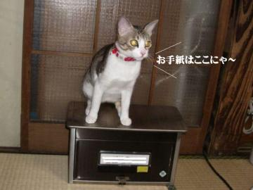 アングリー猫06