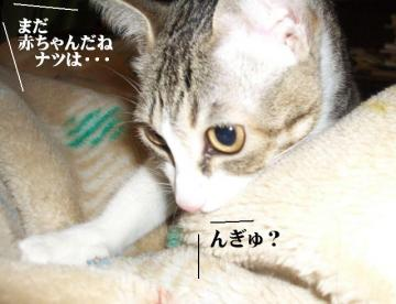 目付き悪03
