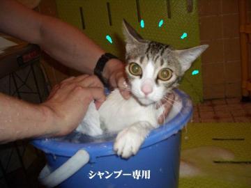 ご入浴02