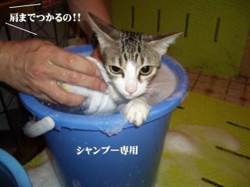 ご入浴03