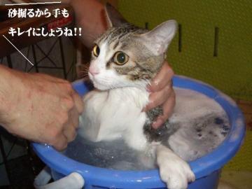 ご入浴04