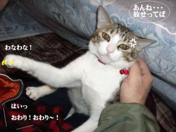 ぱんぱん04