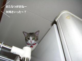 冷蔵庫女王01