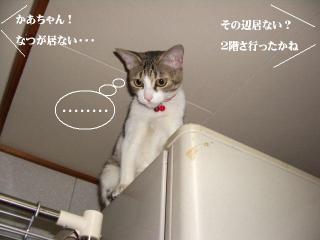 冷蔵庫女王02