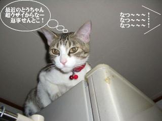 冷蔵庫女王03