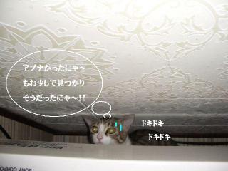 冷蔵庫女王05