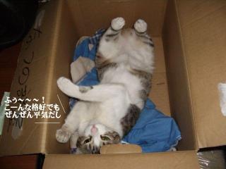 箱寝床04