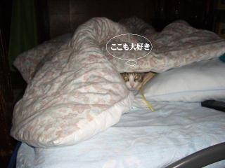 箱寝床06