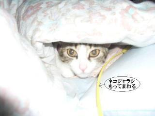 箱寝床07