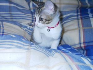 子猫のなつ01