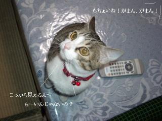 neko草03