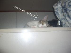 子猫のなつ05