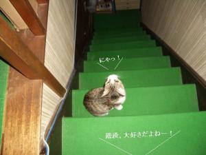 階段の子03