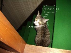 階段の子05