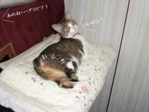 寝姿百景02