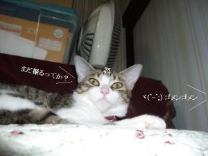 寝姿百景09