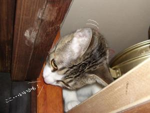 崖上の猫01