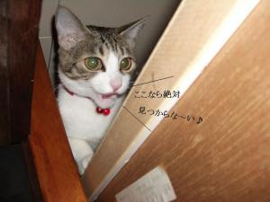 崖上の猫02