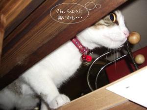 崖上の猫03