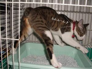 崖上の猫09