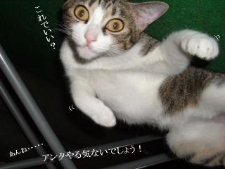 そと猫グラビア02