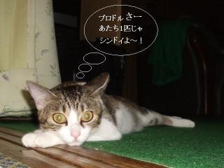 そと猫グラビア03