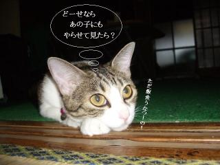そと猫グラビア04