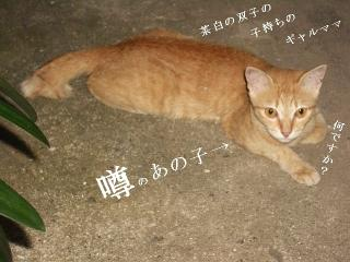 そと猫グラビア05