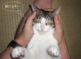 寝た振り猫02
