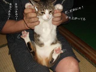 寝た振り猫03