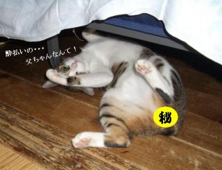 寝た振り猫04